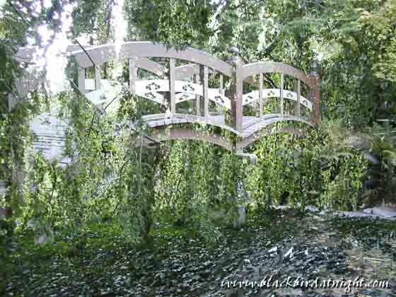 Hanging Gardens © 2003 Jane Waterman
