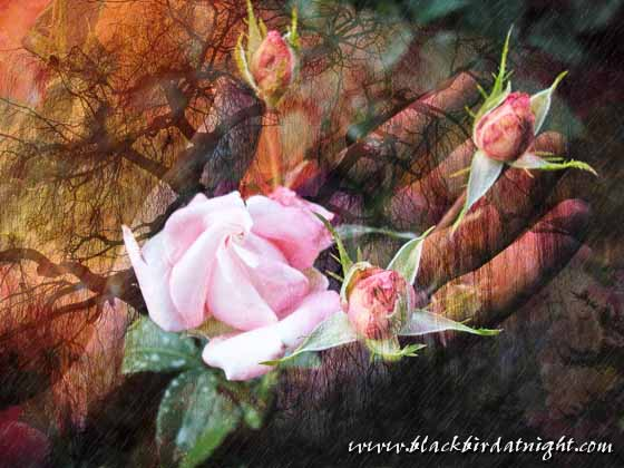A Little Rain Must Fall © 2012 Jane Waterman