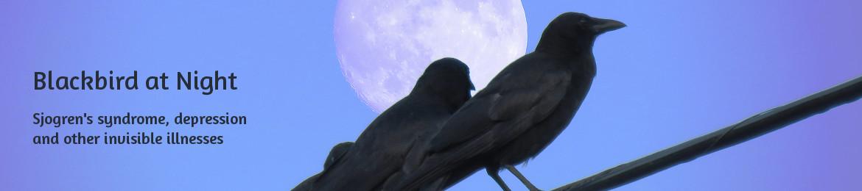 Blackbird at Night