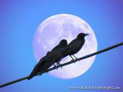 Raven Flew In © 2014 Jane Waterman